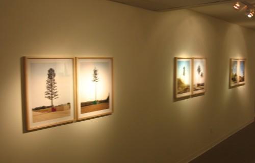 Robert Voit, New Trees @Amador