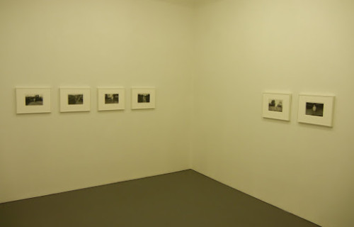John Divola, Trees for the Forest @Wallspace
