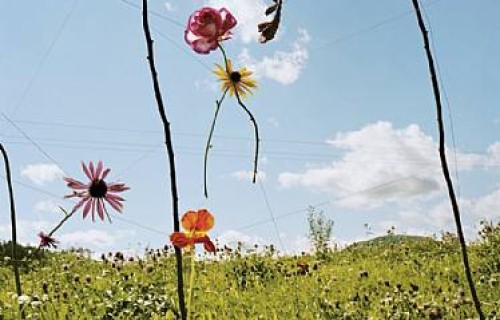 Collier Schorr, Blumen