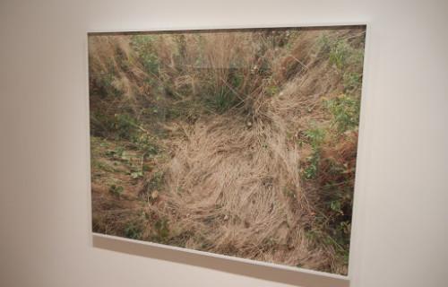 Katherine Wolkoff: Deer Beds @Sasha Wolf