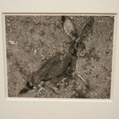Frederick Sommer @Met