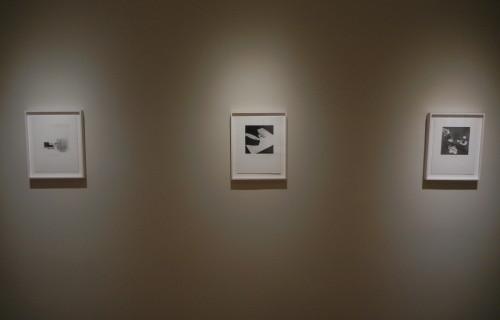 Eureka: William Wegman Photographs 1970-1975 @Craig F. Starr