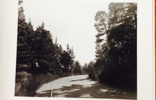 Robert Adams: A Road Through Shore Pine