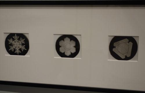 Wilson Bentley @New Museum