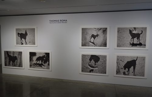 Thomas Roma: The Plato's Dogs Trilogy @Steven Kasher
