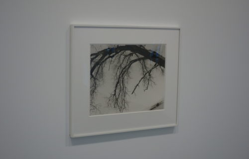 Robert Adams, Trees @Matthew Marks