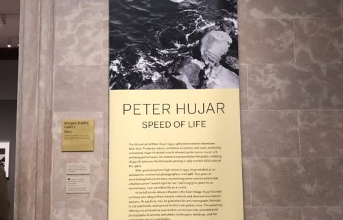 Peter Hujar: Speed of Life @Morgan Library