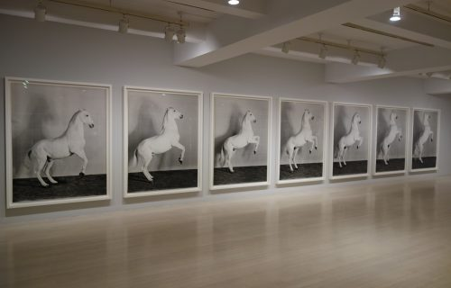 Richard Learoyd: Curious @Pace and @Pace/MacGill