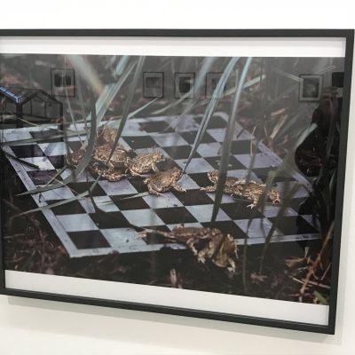 Lothar Baumgarten @Marian Goodman