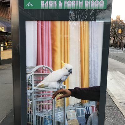 Farah Al Qasimi on an NYC bus shelter